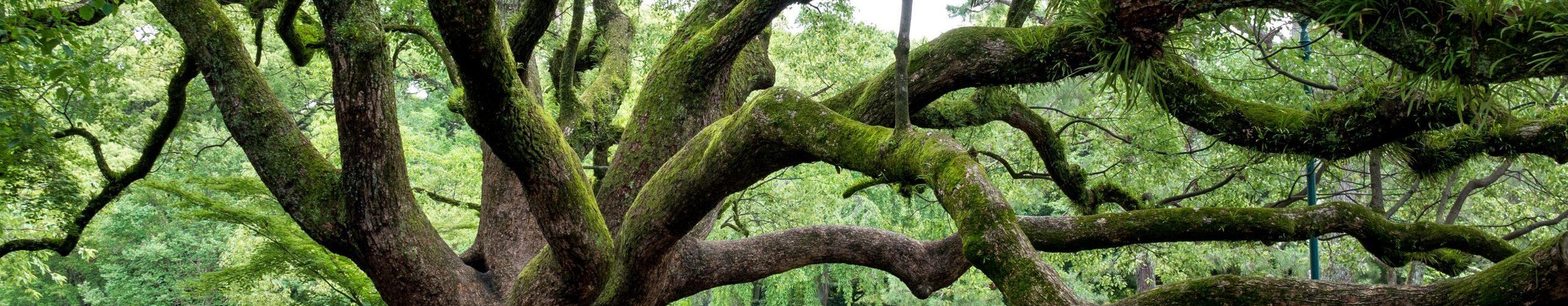 tree-1236626